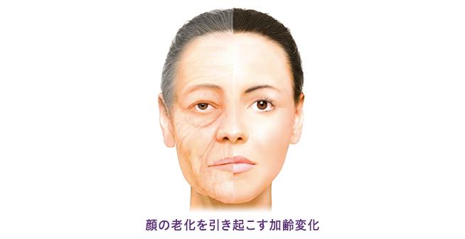 顔の老化を引き起こす加齢変化